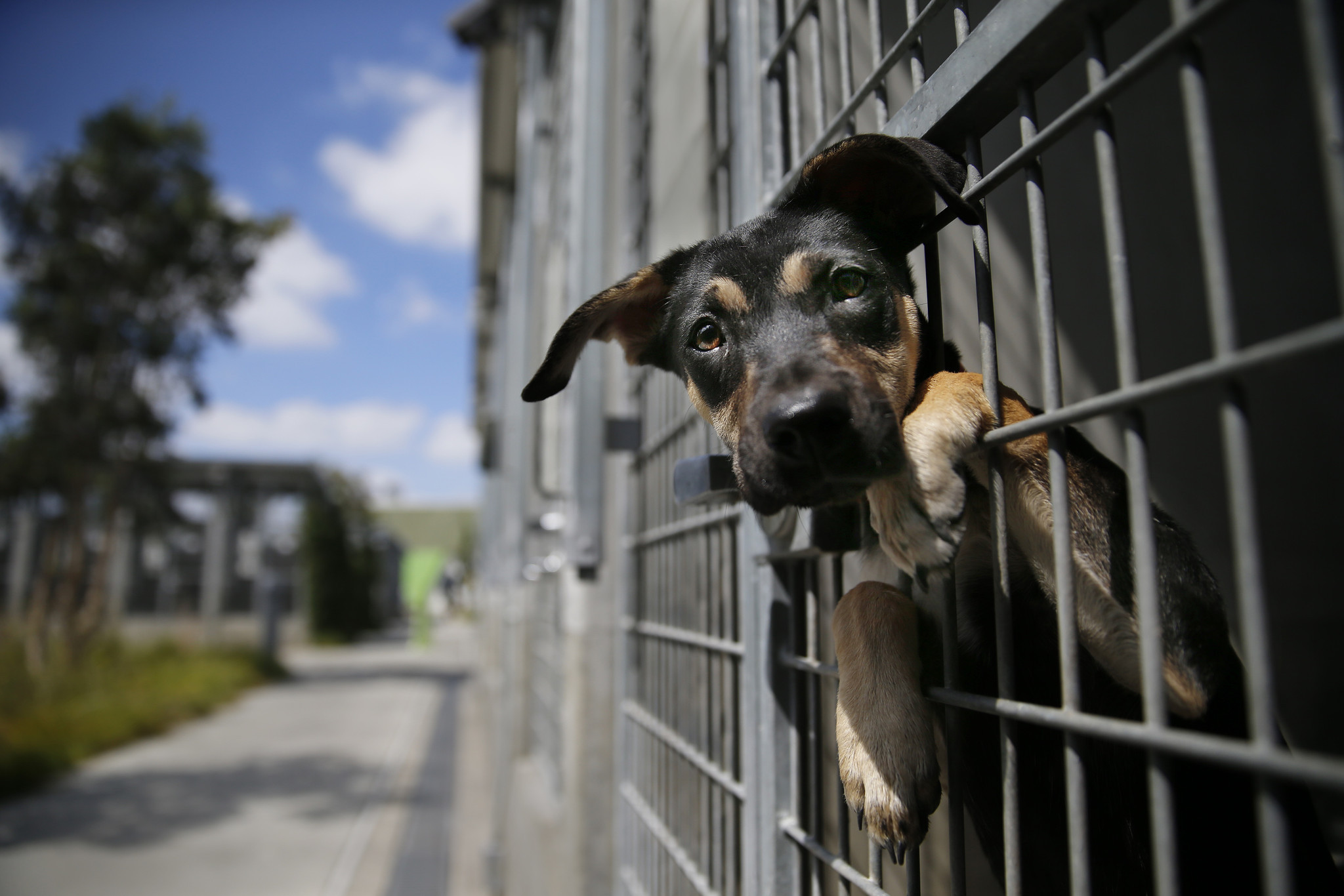 animal shelters need our help